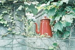 *red pot (fangchun15) Tags: film japan kamakura fujifilm konica  tcx pro400h