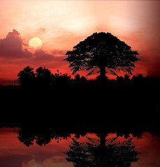 Sunrise calicut (aroon_kalandy) Tags: light sunset orange india tree nature beauty composite clouds reflections creativity evening adobephotoshop artistic awesome kerala fantasy greatshot impressions naturelovers calicut sihloutte beautifulshot anawesomeshot malayalikkoottam sonyh50 aroonkalandy