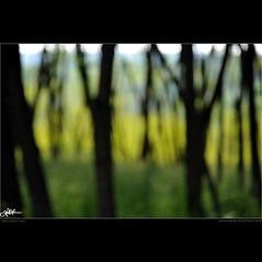 [Project 52 - 22/52] 0159 dove il cielo  terra / where the sky is earth (guido ranieri da re: work wins, always off) Tags: trees verde green alberi nikon waiting poetry poem thoughts silence poesia pensieri indianajones attesa silenzio project52 d700 nonsonoglianniamoresonoichilometri guidoranieridare
