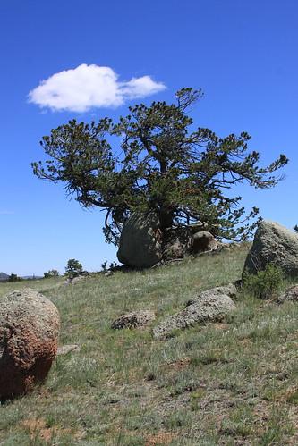 Stark Tree Still