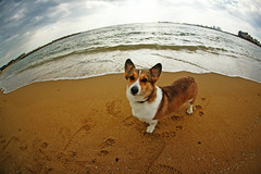 because the earth is round (moaan) Tags: dog beach globe corgi footprints fisheye welshcorgi explored pochiko ef15mm ontheshoreofthesea gettyimagesjapanq1 gettyimagesjapanq2
