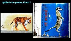 Murs de Paris (Kay Harpa) Tags: streetart paris walls animaux tigre murs suricat pareded kayofkollage photokay juillet2010 juin2010 peindrelesmursdelaville paintingthewallsofthestreets larueévolue gaffeàtaqueue