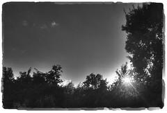 late light (Wim Koopman) Tags: trees light sunset sky bw sun white black holland macro nature netherlands monochrome set garden photography photo nikon bokeh stock late hdr alblasserwaard stockphoto zuidholland stockphotography d90 goudriaan southholland wpk