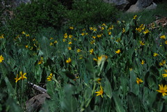 Mule Ear Forest Photo