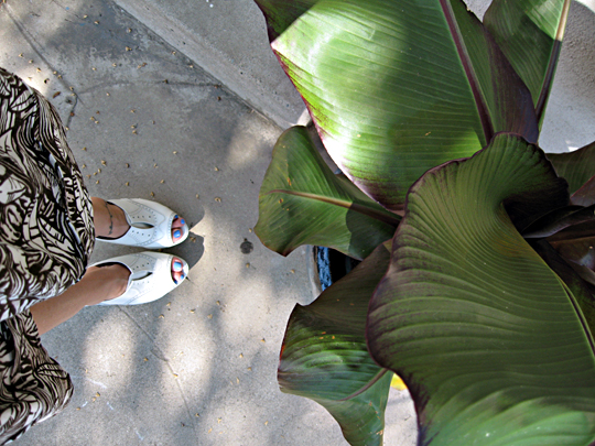 banana leaf plant+leaf print skirt+ivory oxford vera wang wedges