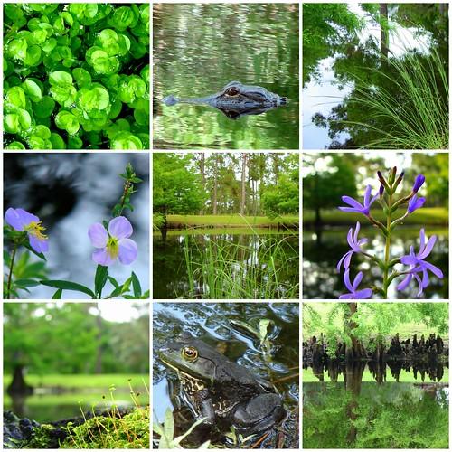 Around the pond...
