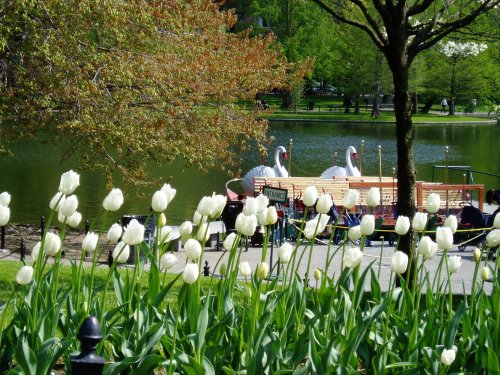 Boston_Public_Garden