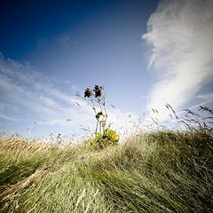 Windswept (beanser ) Tags: ireland colour grass weeds wideangle windswept wexford canonefs1022mm carnsorepoint canon450d july2010 canondigitalrebelxsi beanser wwwpaulfreeneycom paulfreeneyphotowalk