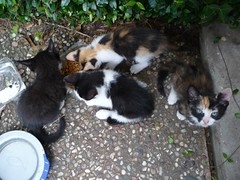 Four Kittens (Philosopher Queen) Tags: family cats cute kittens kitties maryann