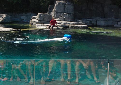 Vancouver Aquarium - Beluga Whales (2)