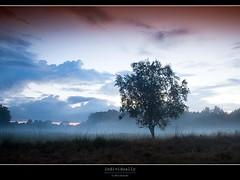 individually (D.Reichardt) Tags: longexposure tree nature fog clouds germany landscape evening europe individually moorland norddeutschland stubben bokel flickraward