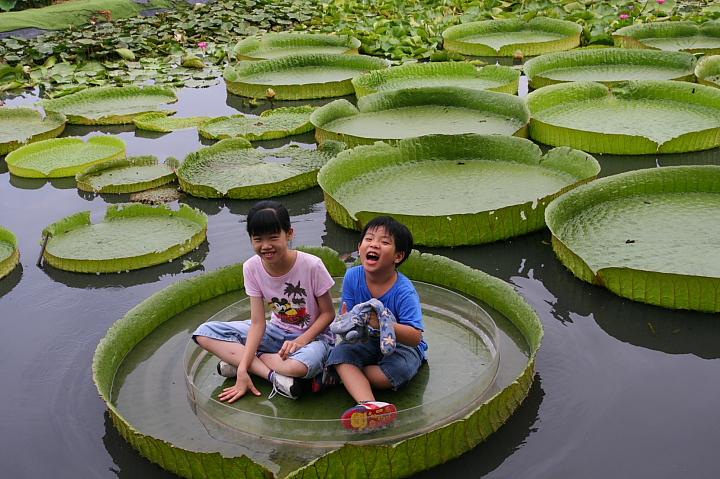 台南白河蓮花公園(水連公園)0048
