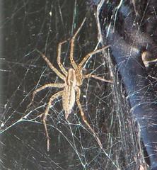 metroparks spider