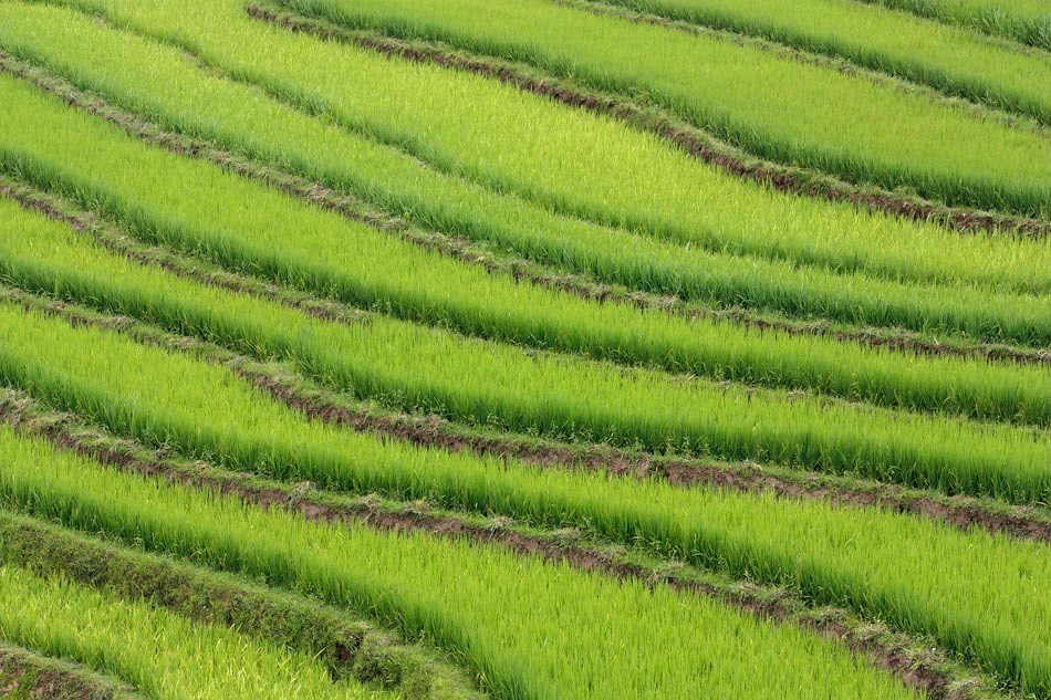 Travel Photos: The Amazing Rice Fields of Sapa, Vietnam
