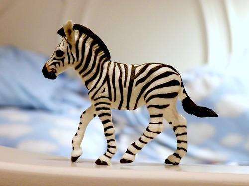 day 210: zebra