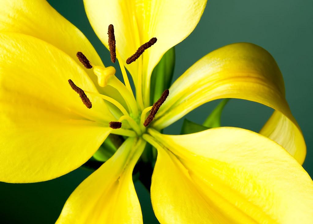 Pollen (184 of 365)