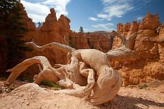 baudchon-baluchon-bryce-canyon-5924170710
