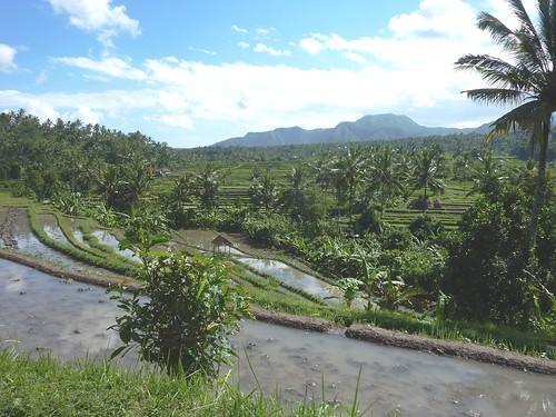Bali-Tirtagangga (51)