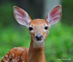 Bambi up close & personal