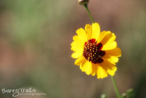 210-yellow flower
