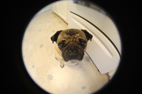 Cheap fish eye lens fun