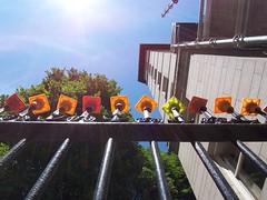 blunt (studio-s) Tags: cruise sunset fountain boston opera massachusetts pistachio freedomtrail publicgarden coppshillburyingground granaryburyingground bostonharbor bostonpublicgarden mikespastry saintfrancisofassisi massachusettsstatehouse bunkerhillmemorial