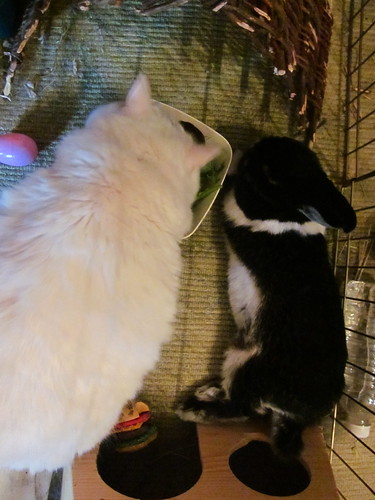 Nilla eats Oreo's salad while Oreo rests.