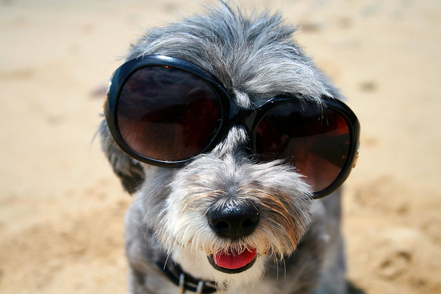 Michi cane con occhiali da sole