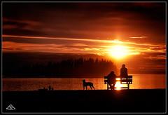 Enjoying Evening Sun (Artvet) Tags: