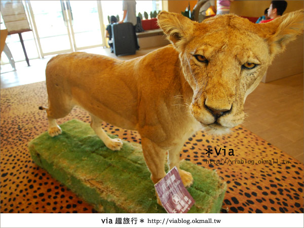 【新竹住宿】來去和動物住一晚~關西六福莊生態渡假旅館6