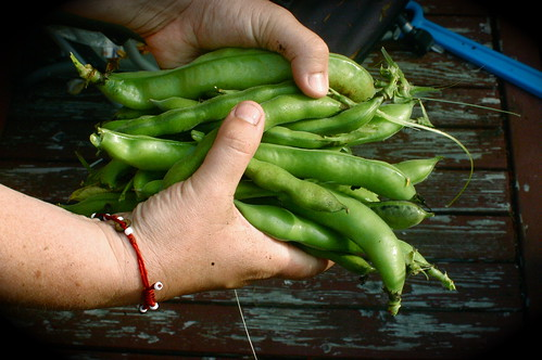 i grew these fava beans