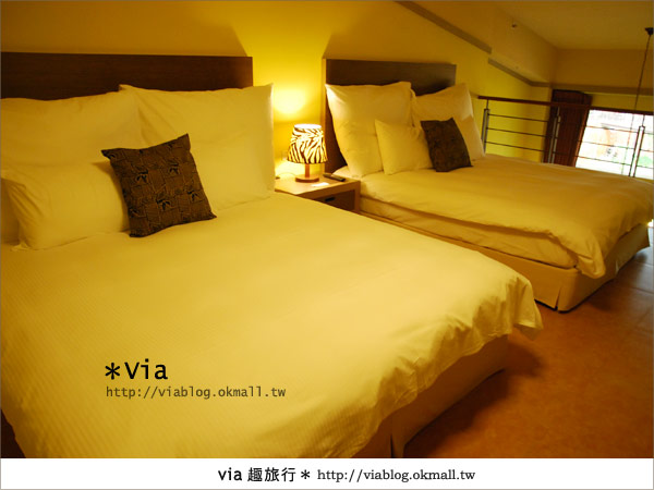 【新竹住宿】來去和動物住一晚~關西六福莊生態渡假旅館37