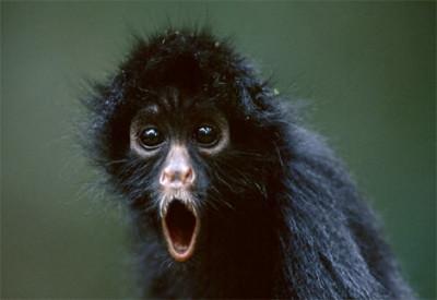 monkeyOMG