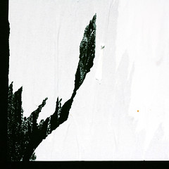 Snowdrop (daliborlev) Tags: snow abstract flower texture poster square urbandecay brno damage damaged almostblackandwhite mundanedetail tornpaper