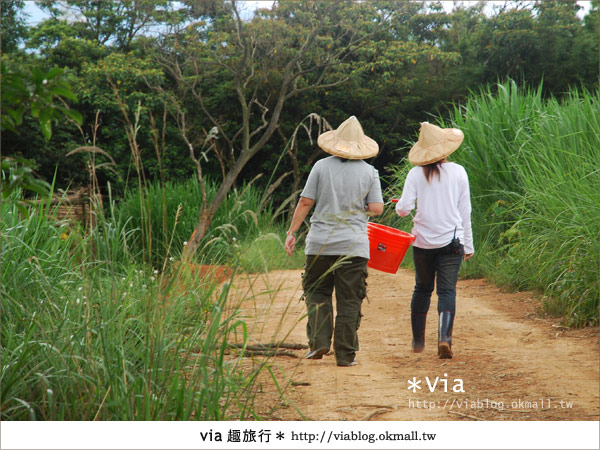 【關西六福莊】精彩秘探野生動物園/DIY手作/農趣樂~!2