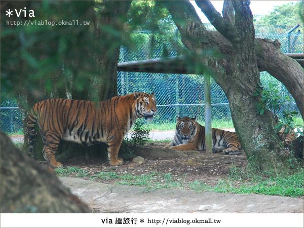 【關西六福莊】精彩秘探野生動物園/DIY手作/農趣樂~!23
