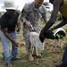 Veterinary Outreach Korome Ethiopia