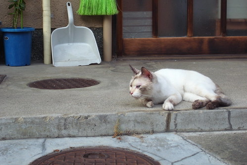 Today's Cat@2010-08-13