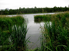hey, that's a good pond (***superman***) Tags: canon a480