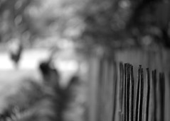 Rural fence | Bilar Town, Bohol, Philippines (.I Travel East.) Tags: blackandwhite bw monochrome rural fence philippines bohol bilar boholphilippines ruralfence bilartown