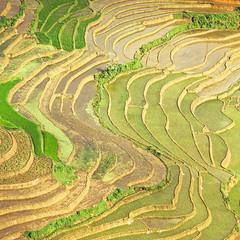 Rice Paddies Close Up (veronique robin) Tags: landscape vietnam ricepaddies agriculture sapa southasia asianagriculture