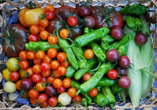 Mid August Harvest 2