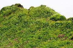 山頂付近のお花畑
