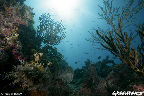 A view of corals, sponges, algae and hydroids