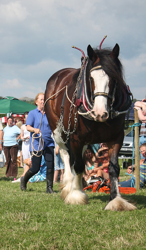 Ruby the Clydesdale demo 3