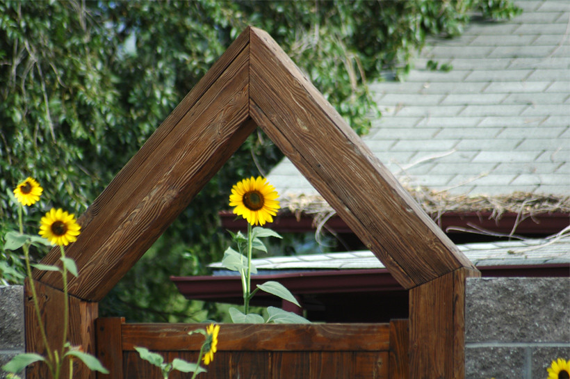 Gate with Sunflowers 1