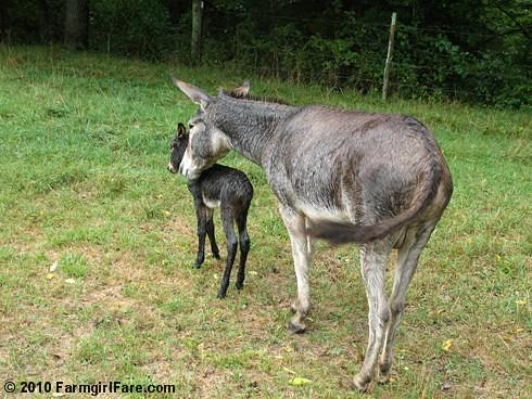 Esmeralda's Baby Boy 15