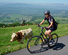 Lovely Ladies (will_cyclist) Tags: france alps cycling cows saleve cowsx