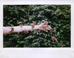 (katieeleanor) Tags: pink green rose wire hand arm finger katie garland tips portfolio eleanor instax