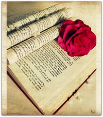 Never judge a book by it's cover.  Turn the pages and have a read before passing your judgement. (Pink Flutterby   OFF) Tags: old pink roses flower macro texture rose canon book words pages antique text pearls powershot story cover page pearl aged sx120is sx120